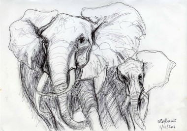 Elephants_stylo_20111101_R.jpg